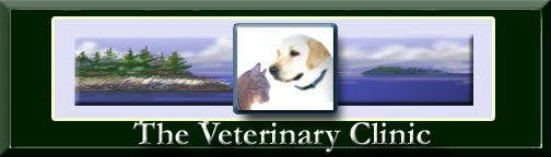 The Veterinary Clinic