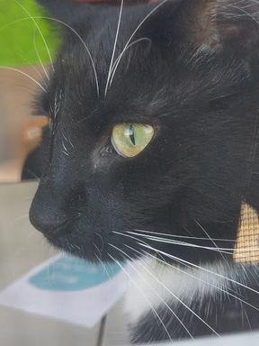Clinic Cat Sam