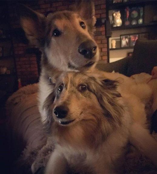 Ellie and Moose