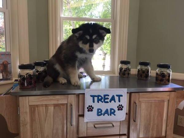 treat bar