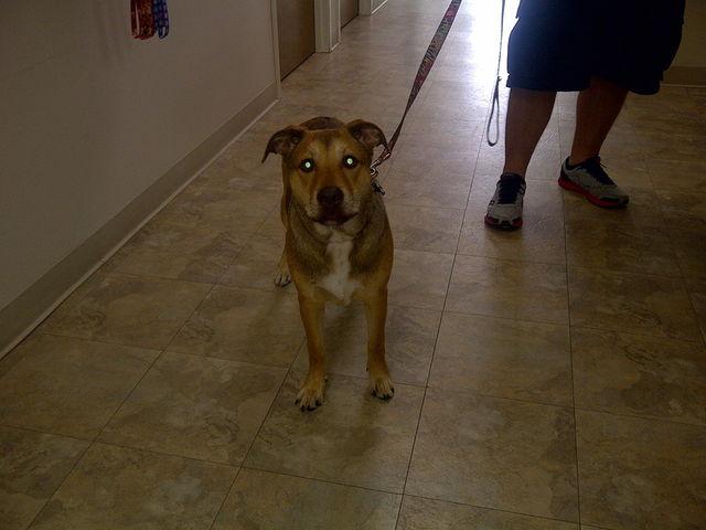 Image of a dog on a leash