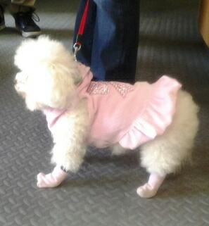 Image of a dog with a pink sweater