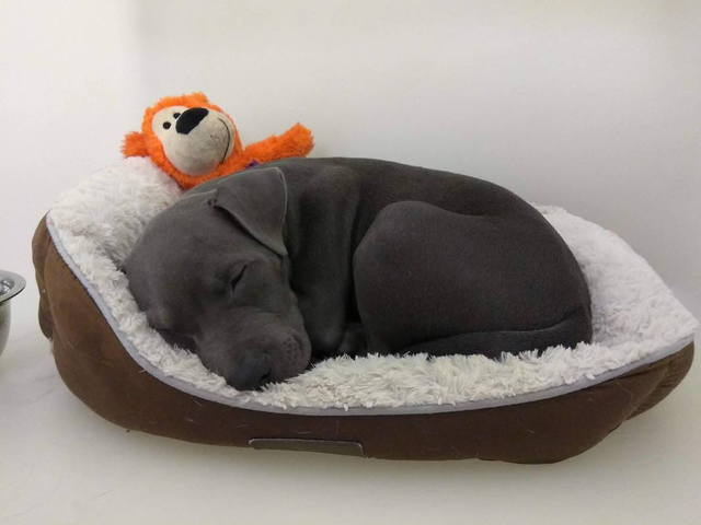 Image of a puppy sleeping