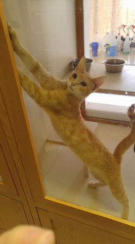 Image of a cat stretching