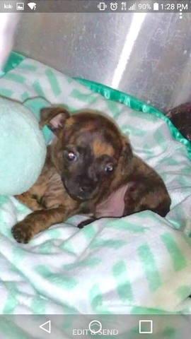 Image of a newborn puppy