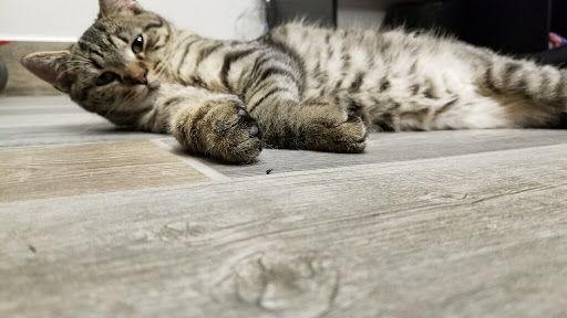 Clinic Cat Chirp
