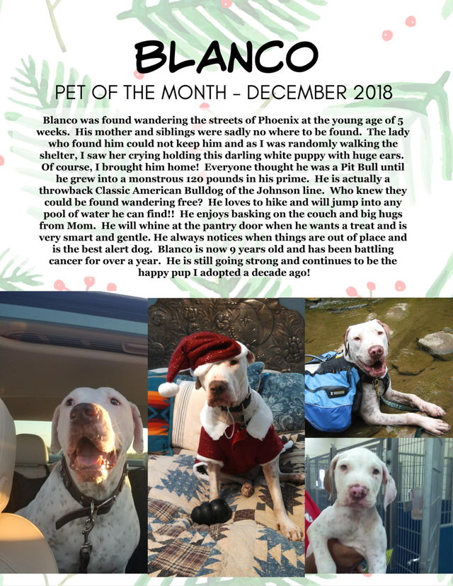 PAWS Veterinary Center Pet of the Month