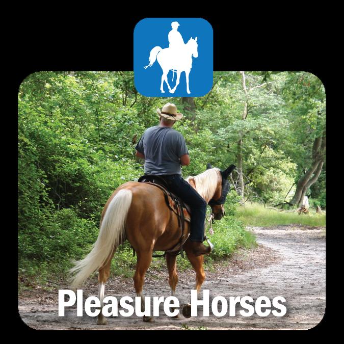Pleasure Horses