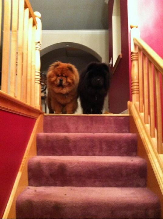 orange and black dogs