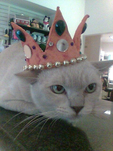 crowncat
