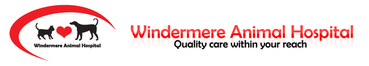 Windermere Animal Hospital - Quality care within your reach