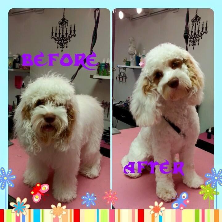 Dog Grooming Gallery