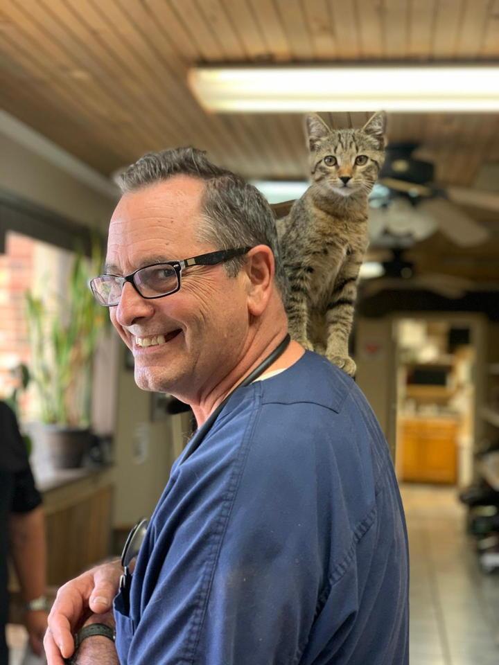 doc kitten