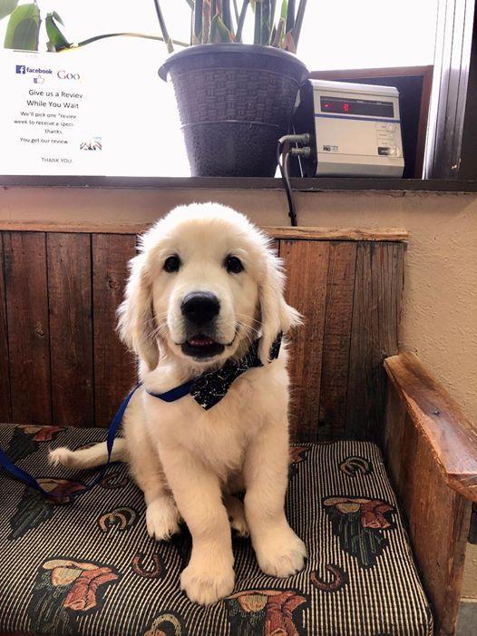pup smiles
