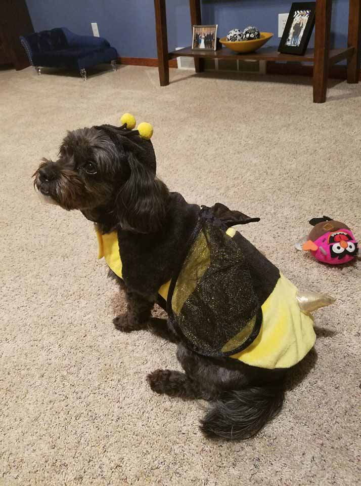 Sofie the BumbleBee!