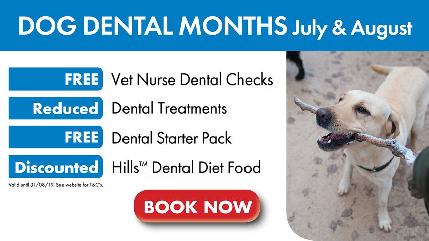 Dog Dental Months July & August