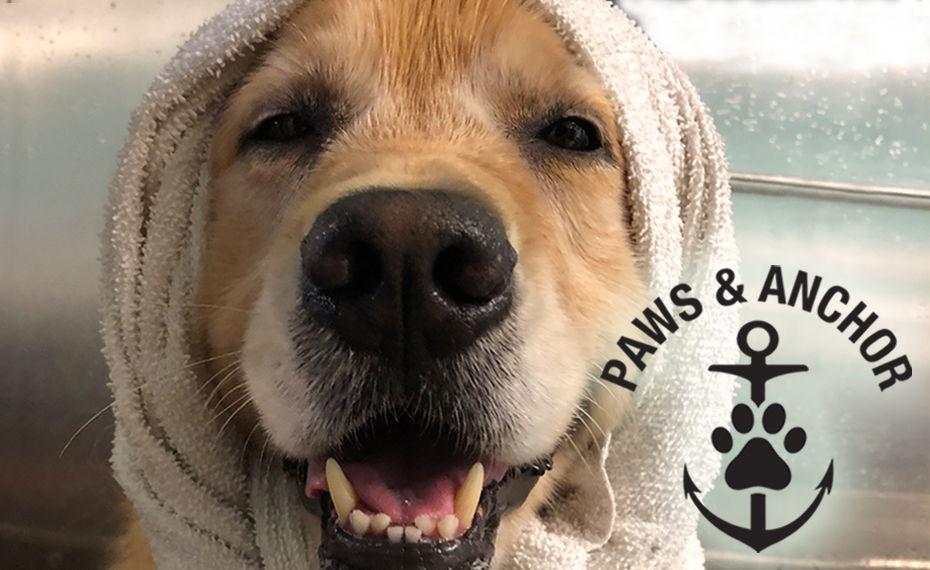 Dog Spa & Grooming