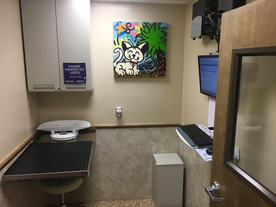 Exclusive cat exam room